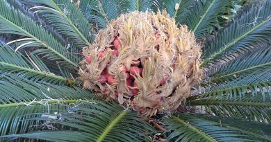 How to Determine if a Cycad Seed is Viable