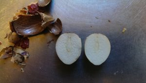 Cycad seed cut open to show embryo